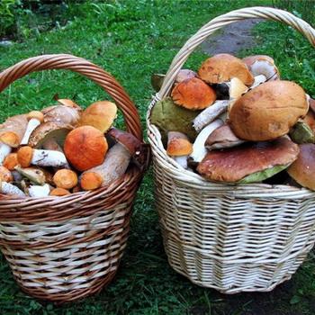 Характеристика основных экологических групп грибов