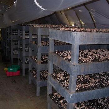 Технология выращивания шампиньонов