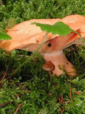 Выращивание лесных грибов на дачном участке своими руками
