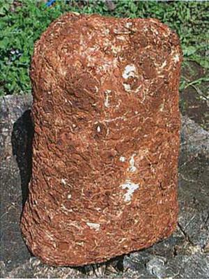 Выращивание шиитаке на пнях, в теплице и автоклаве